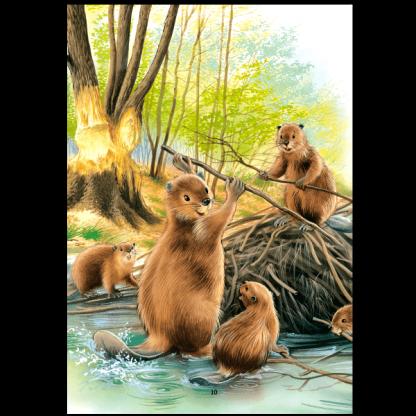 Видрата Нора и рибарчето - Животните и техните истории - страница